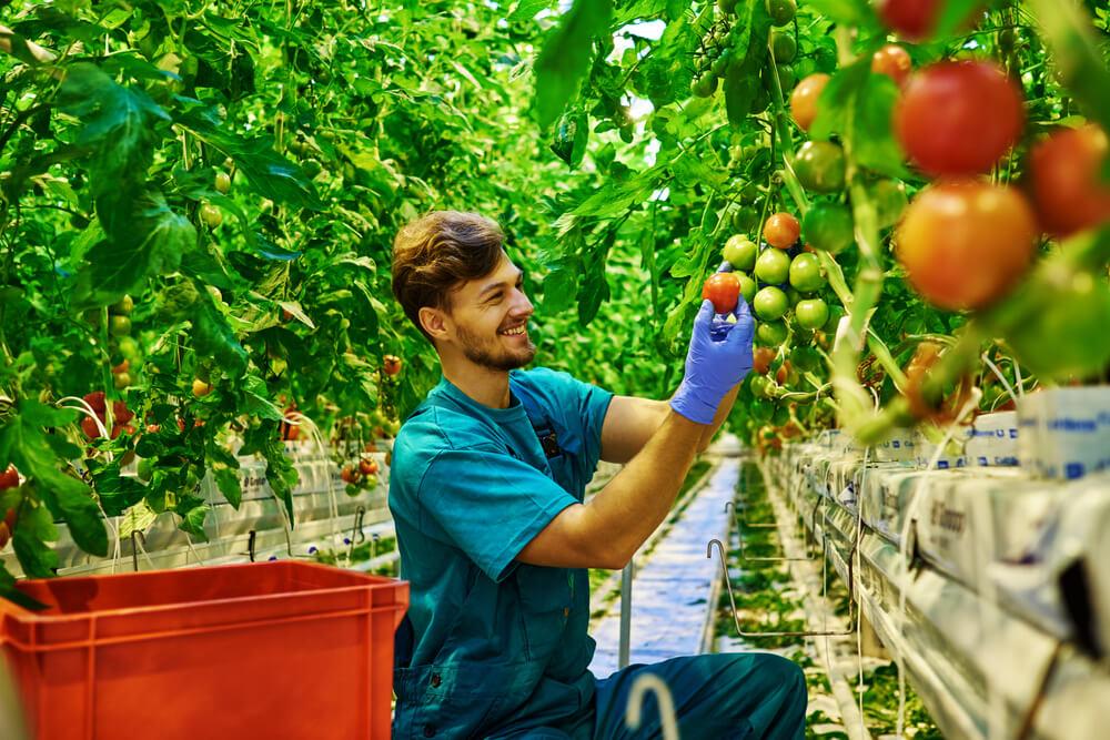 Organic farm