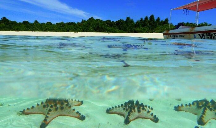 Star Fish at the sea bed
