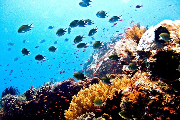 Scuba Dive in the Komodo Islands