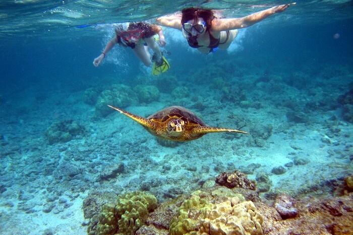 Snorkelling at Menjangan