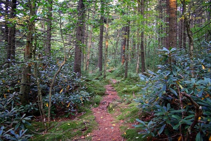 Take a walk through the scenic trails