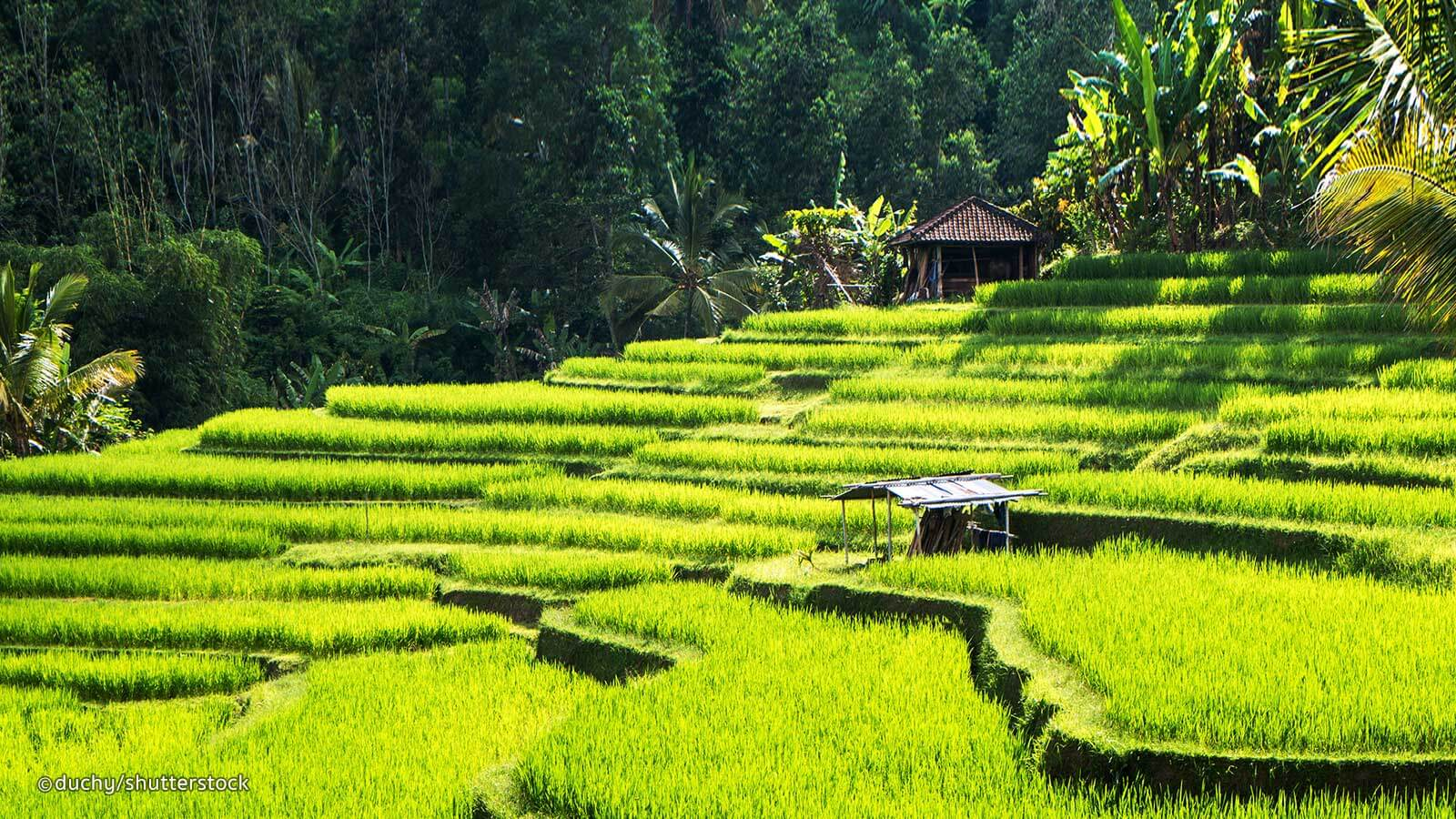 gorgeous Ubud