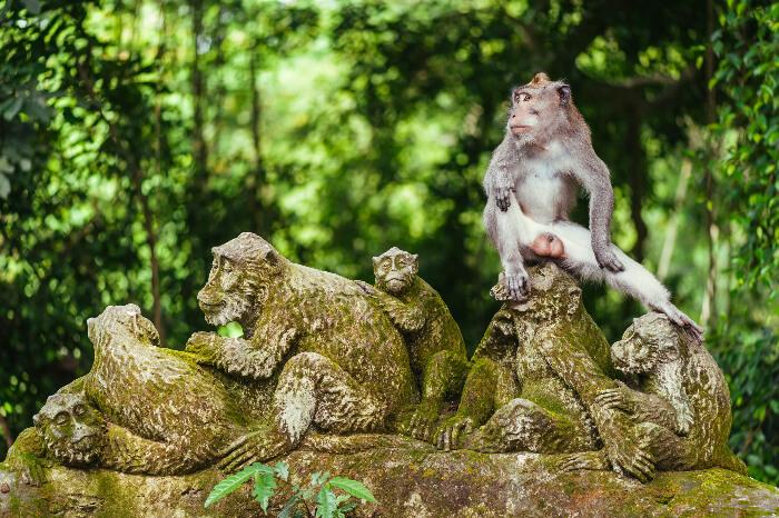 Ubud's biggest tourist draw