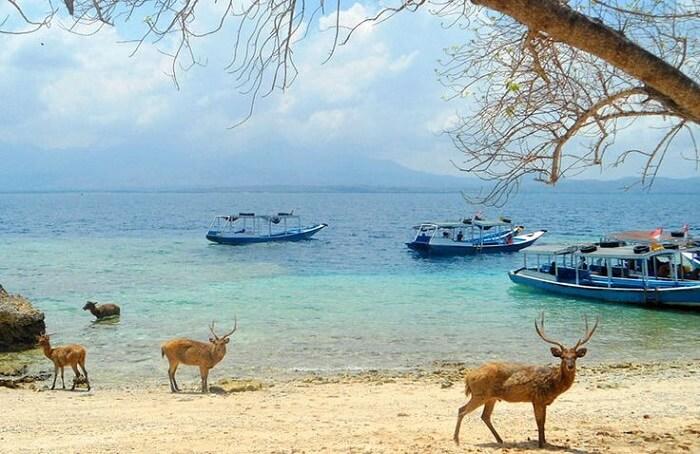 West Bali National Park