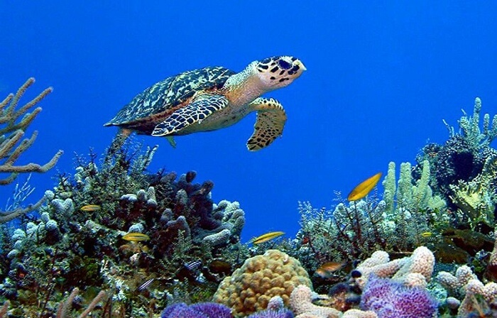 diverse fish species