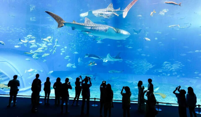 where people can feel aquatic creatures