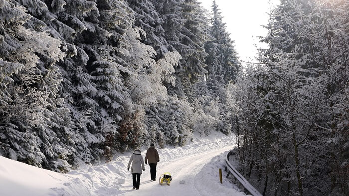 two people walking through forest
