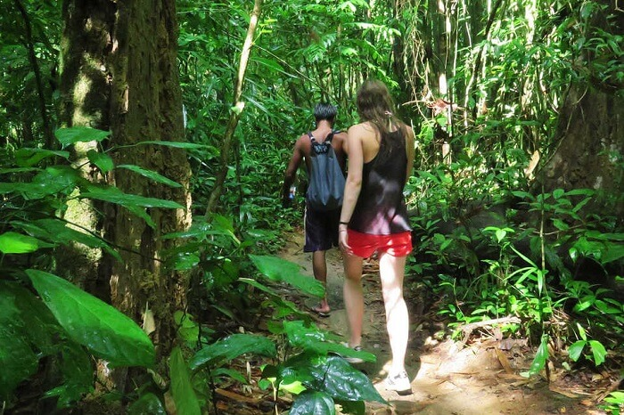 trekking in Khao Sok jungle