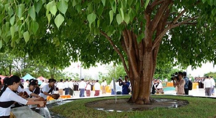 kason festival
