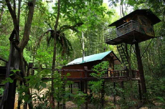 jungle tree resort