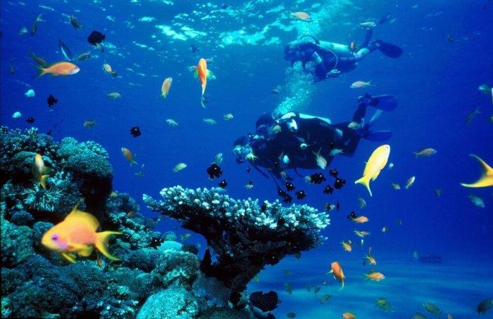 People diving in sea of Koh Tao
