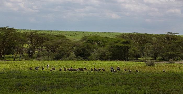 ngorongoro-conservation-area-
