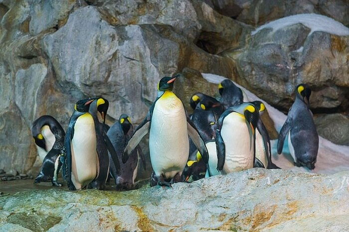 penguin coast