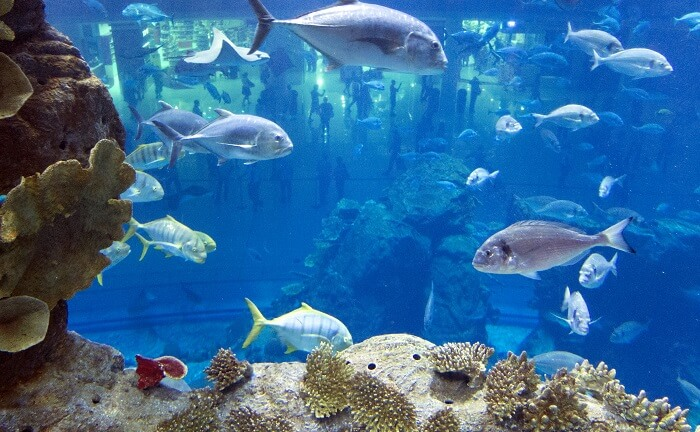 the vibrant marine life
