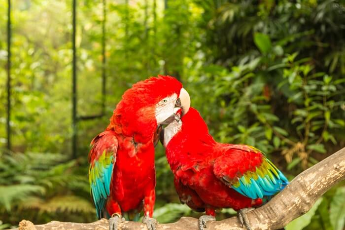 parrots in jurong bird park
