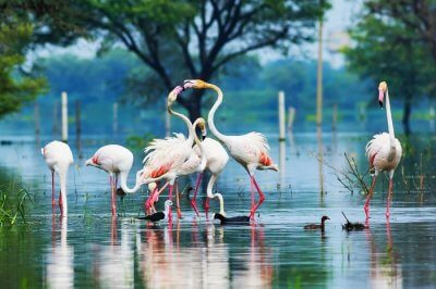 Bharatpur attractions