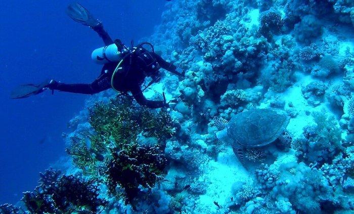 Man diving in Similan islands