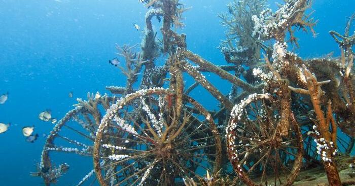 underwater bali