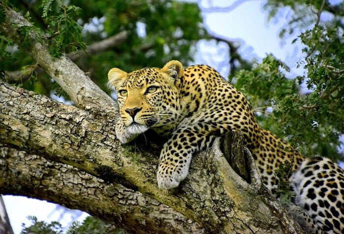 Kenya welcomes more animals