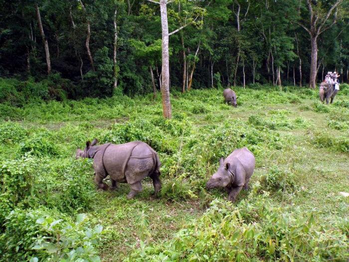 hippopotamus in the park