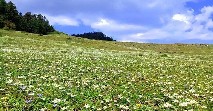 Bucci_Flower