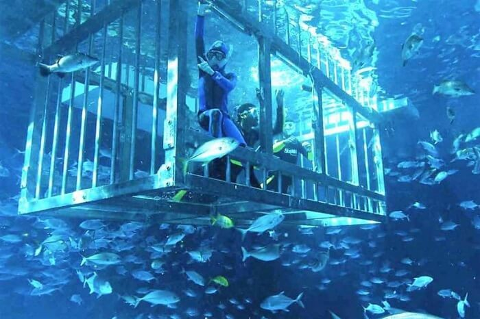 Experience Cage Snorkelling