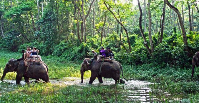 elephants and people