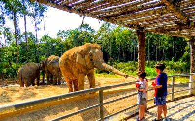 child feeding food to the elephant in the zoo