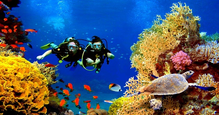 Two people scuba diving with corals