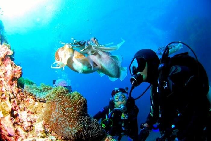 explore the marine life