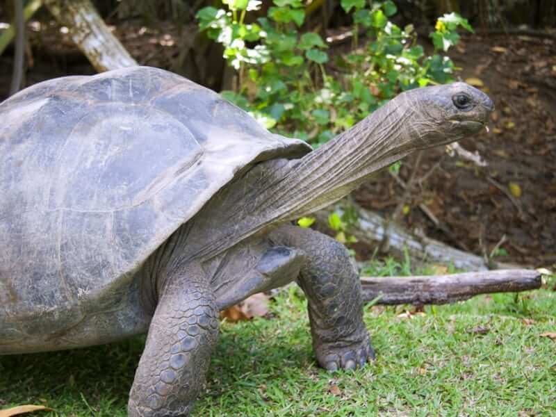Fauna: Sanctuary of Giant Tortoises