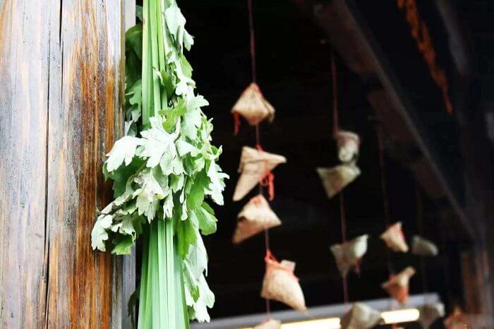 Hanging Mugwort