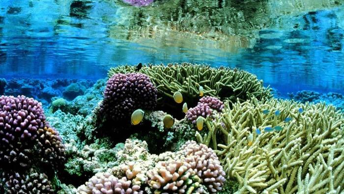 plant inside seawater