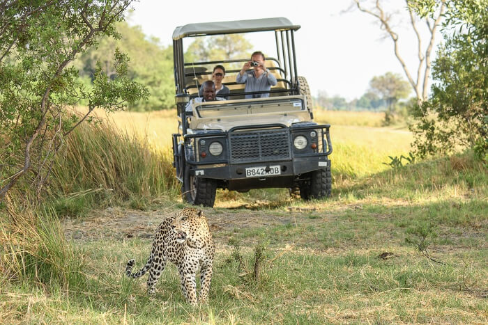 jeep and jaguar