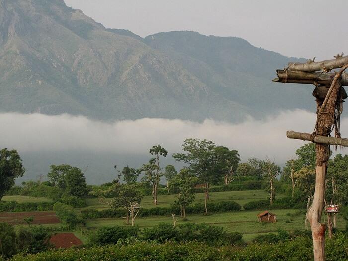 rural life in kemmagundi