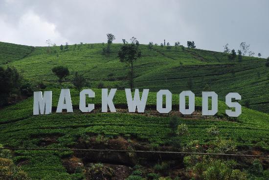 world's best tea at Mackwoods Tea Center