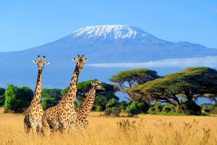 Volcano in Tanzania