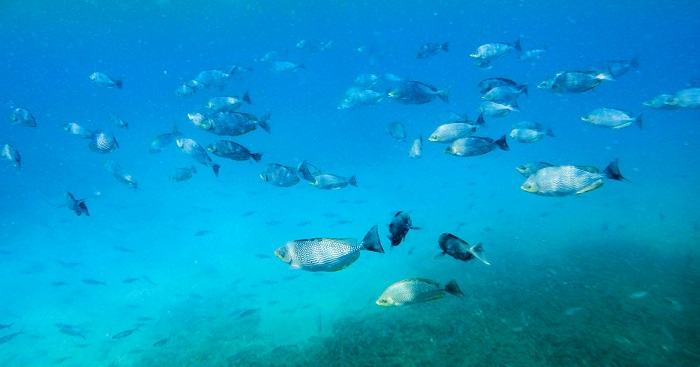 fishes at paasikudah sri lanka