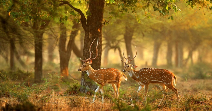 Phibsoo Wildlife Sanctuary cover