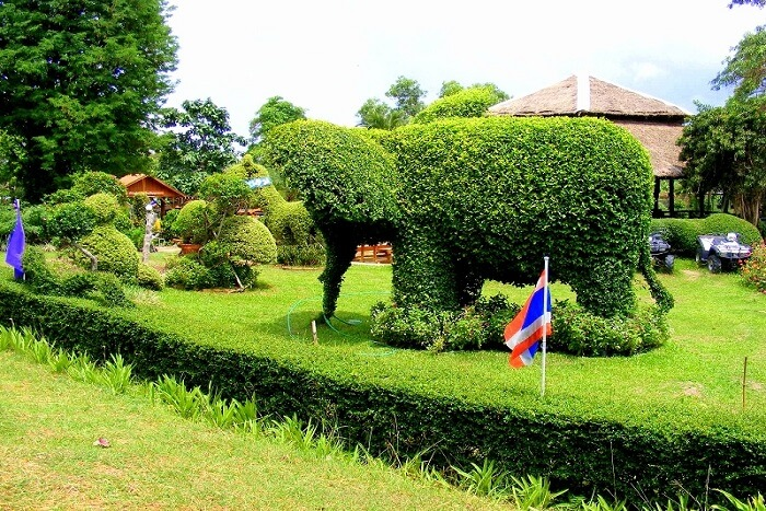 plant in shape of elephant
