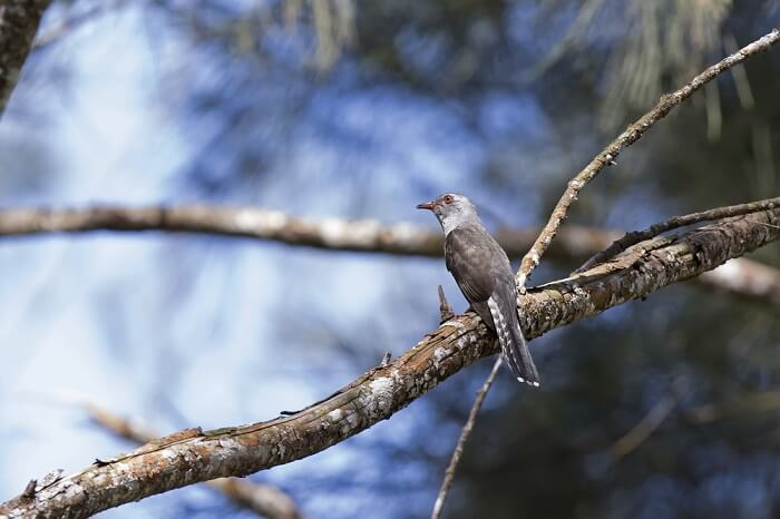 Sarawak Similajau National Park