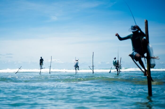 Stick fishermen of Sri Lanka.