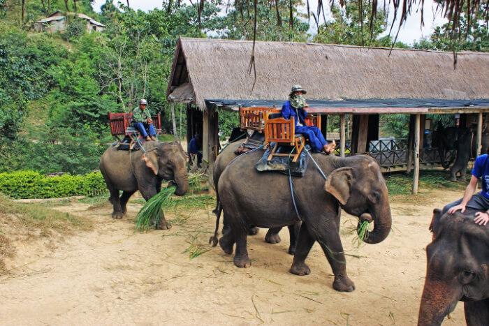 man on the back of elephant