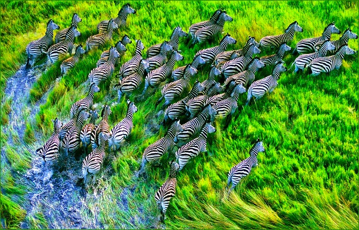 diversity of animals and birds