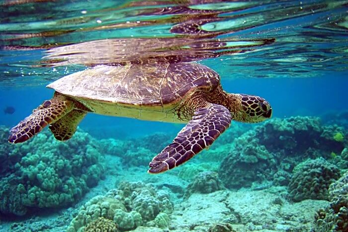 Turtle Island National Park Cover