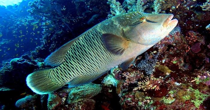 famous fish at goda gala diyamba