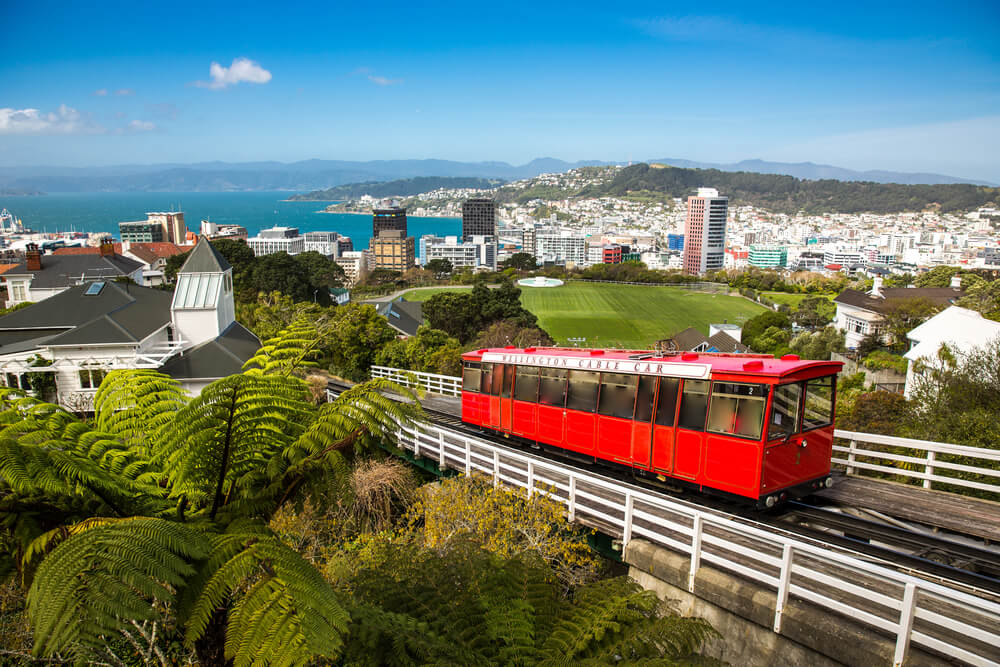 Wellington look vibrant