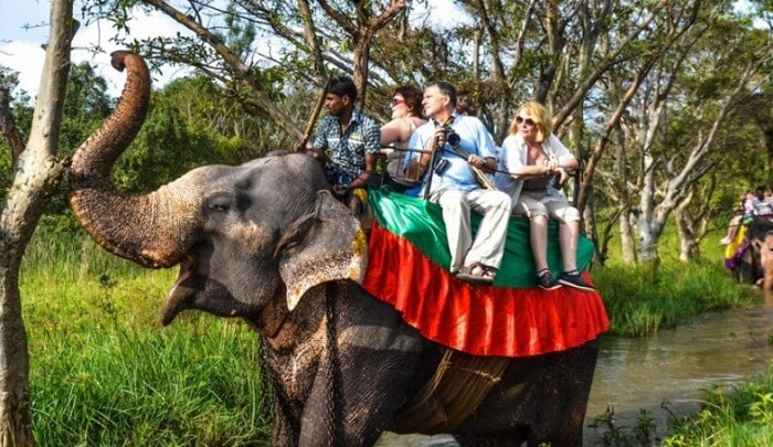 elephant safari in Colombo