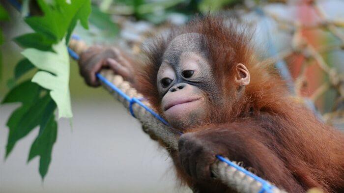 monkey on plant