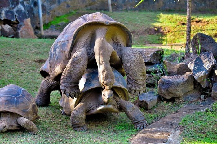 animals playing